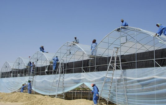 greenhouse_construction